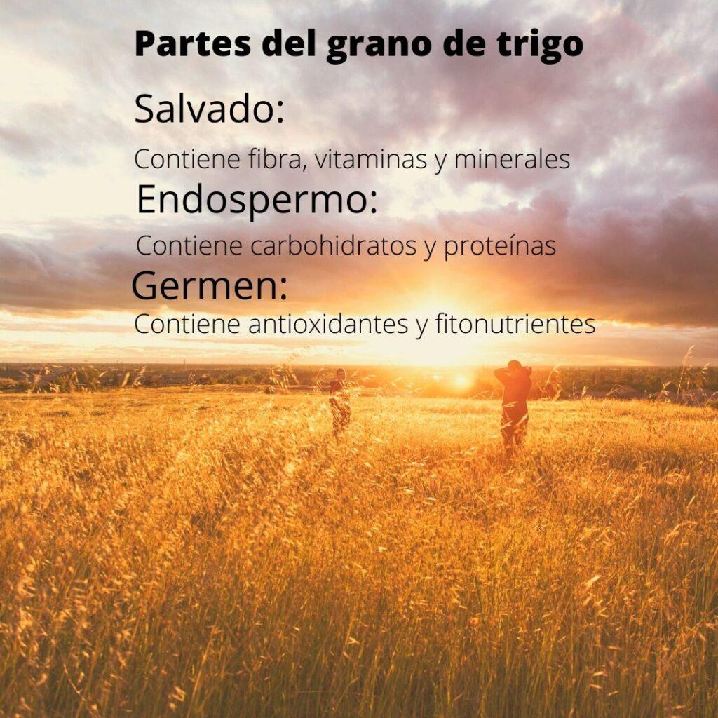 Partes del grano de trigo. Pan blanco o integral que partes del grano lleva cada uno